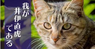 井伊直虎(猫)